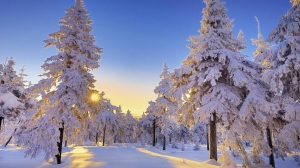 sun-peeking-through-snow-covered-trees